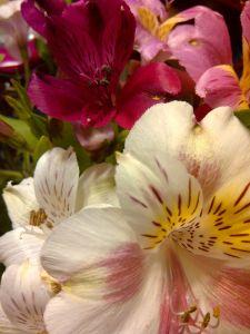 flowers080212