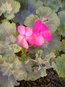 Pretty flowers from my backyard!