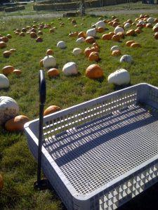pumpkinwagon